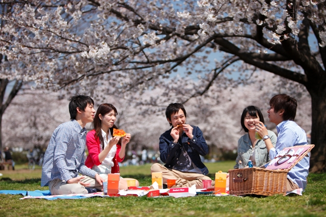 cherry-blossom-viewing5